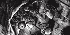 drawing of acorns