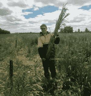australian boy with crop Photo by Bruce Maynard
