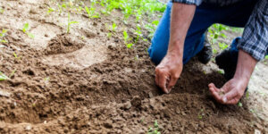 man planting seeds in dirt