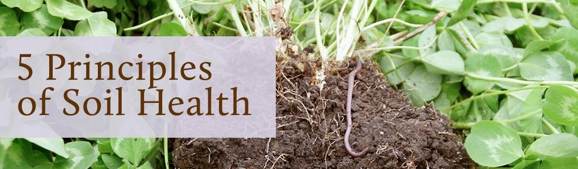 5 Principles of Soil Health