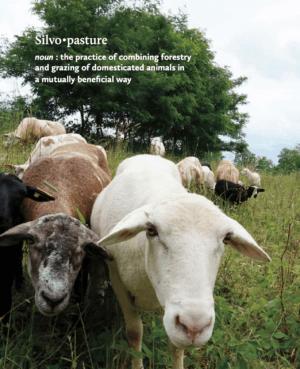 silvopasture and goats