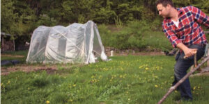 emmett working in a field