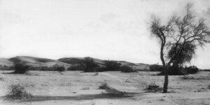 mesquite in desert